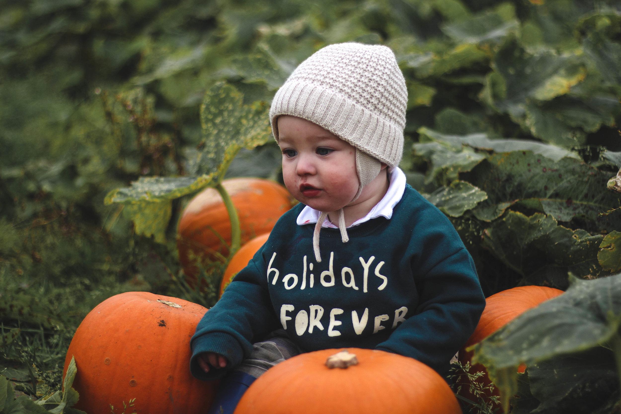 Pumpkin Picking Scotland Craigies Farm