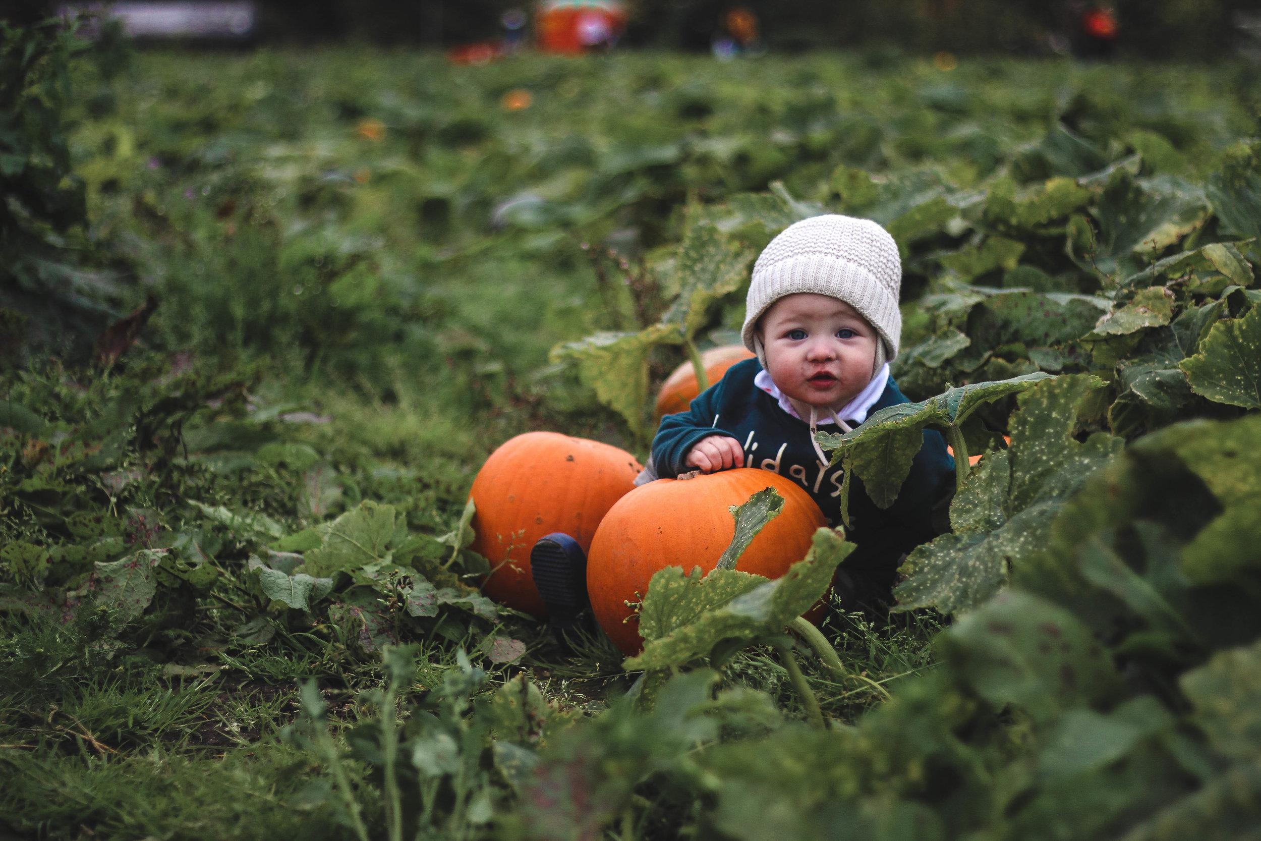 Pumpkin Picking In Scotland Arnprior Farm