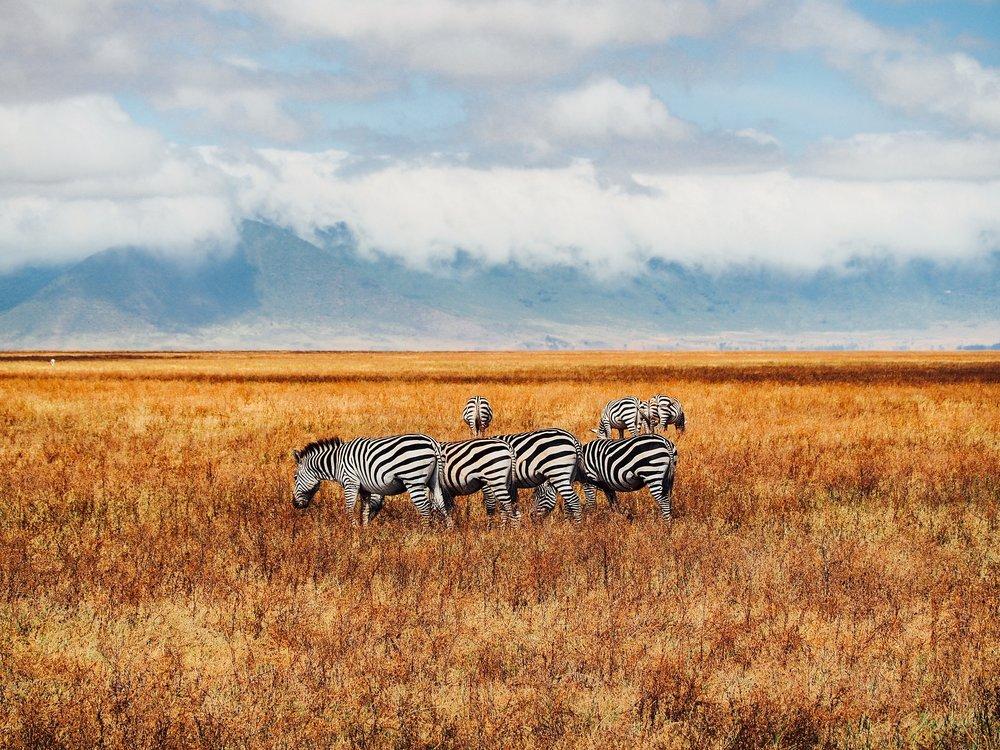 Tanzania | May 22 - June 3, 2020