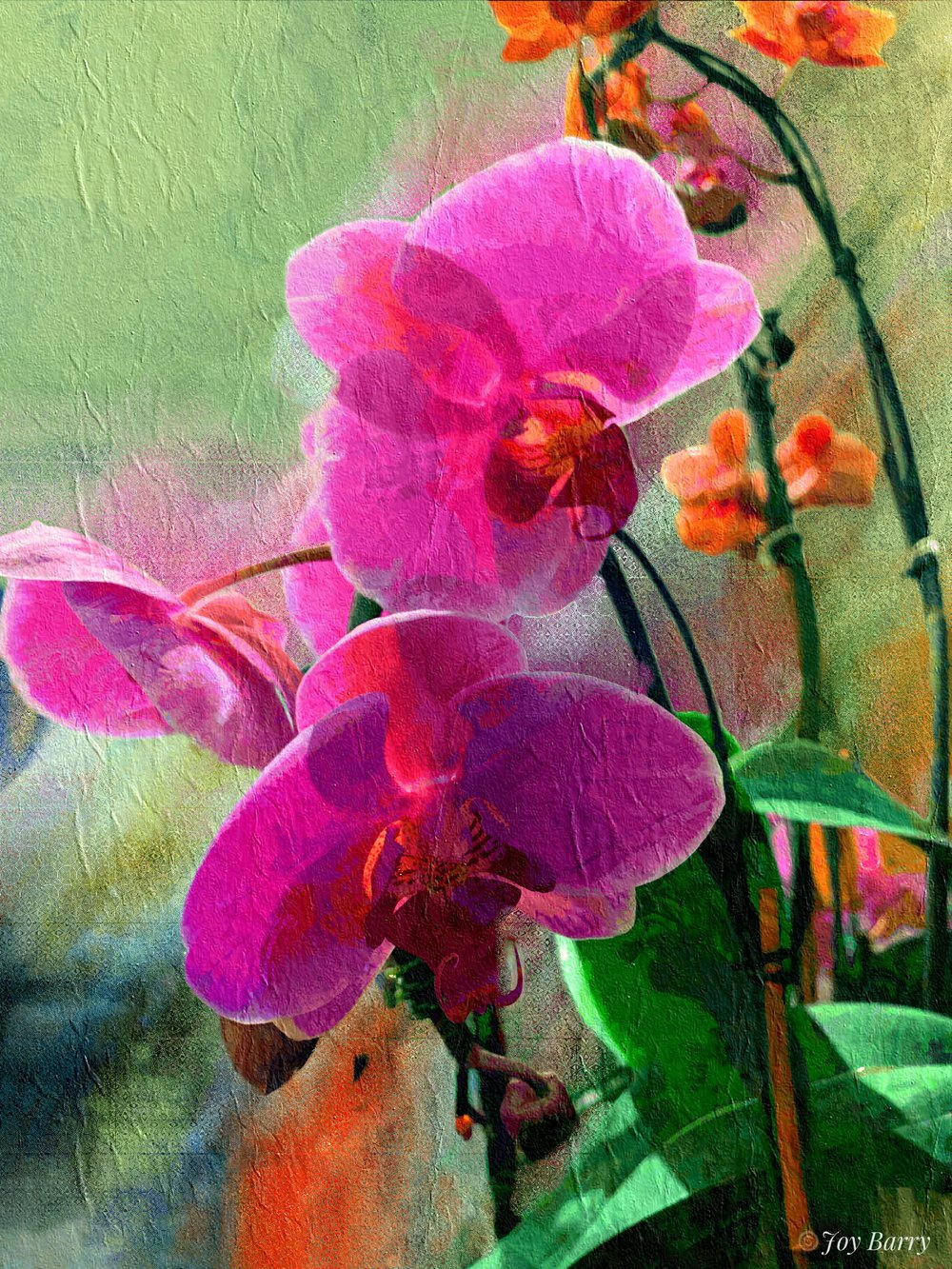 January 19, 2019 - These gorgeous orchids were greeting customers as they entered Whole Foods in Hyannis, Massachusetts.