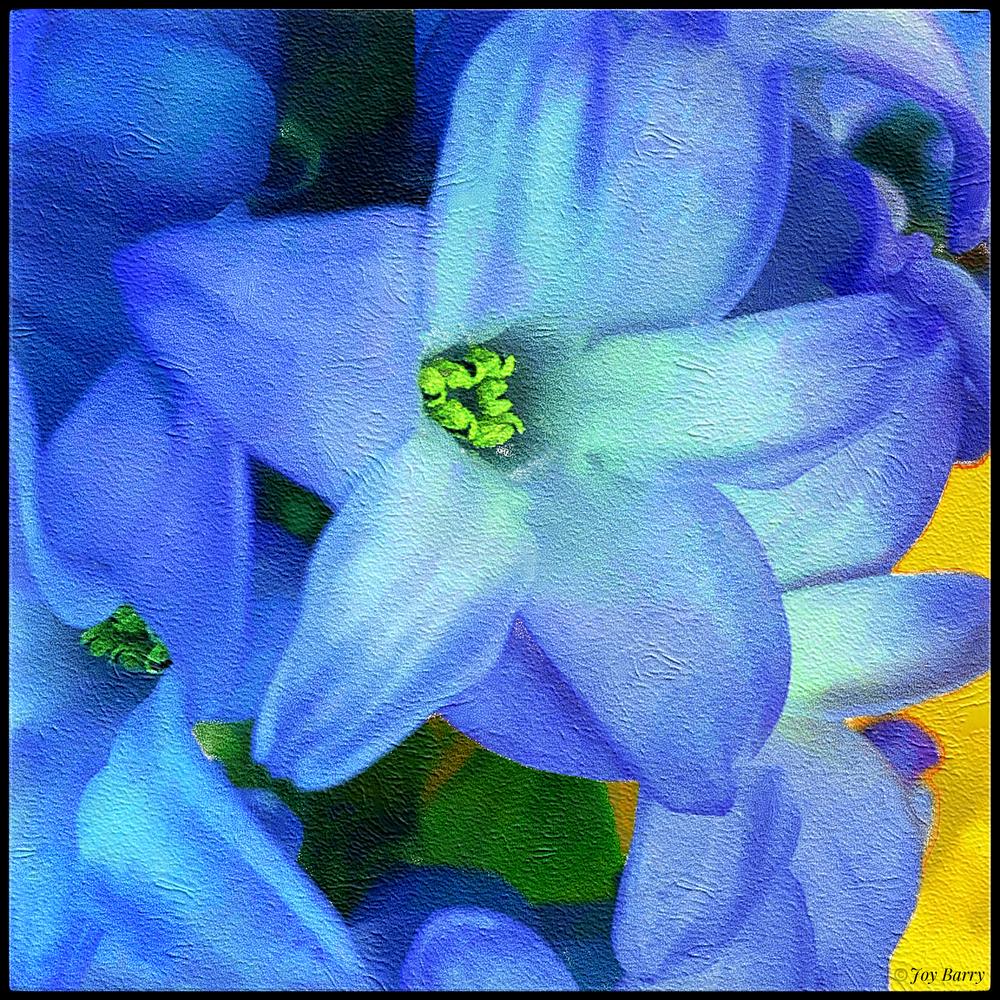 March 21, 2019 - Hyacinth (happy spring!).
