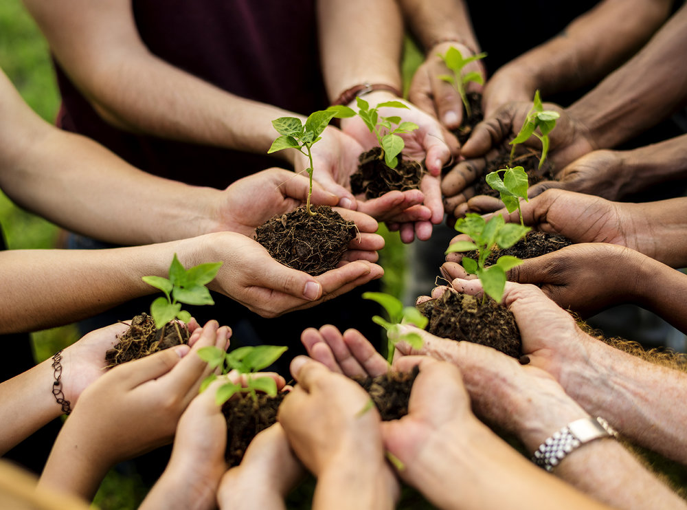 1group-of-volunteer-with-sprout-for-growing-YXLFC36.jpg