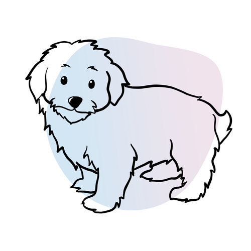 available-maltipoo-puppies.jpg