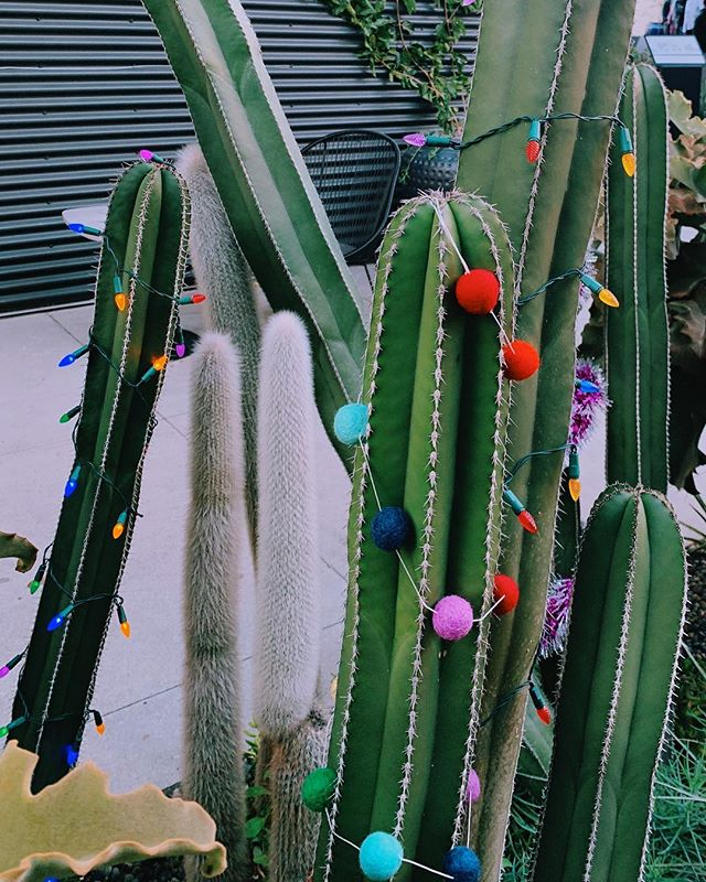 It's the holiday season, don't be a prick 🙂🌵🎄