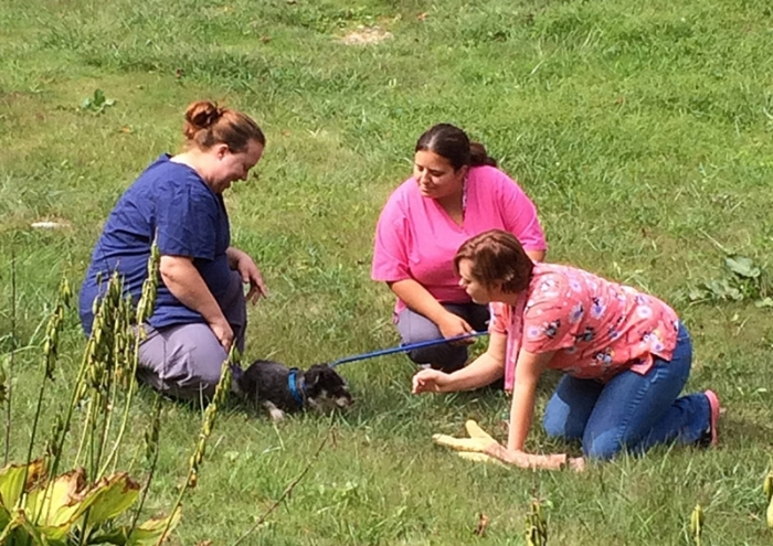 Shelter staff Karen, Tamara, Amber putting a collar on Gabe and saying goodbye on his last day with them