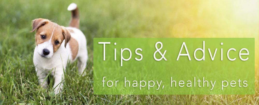 tips and advice.jpg