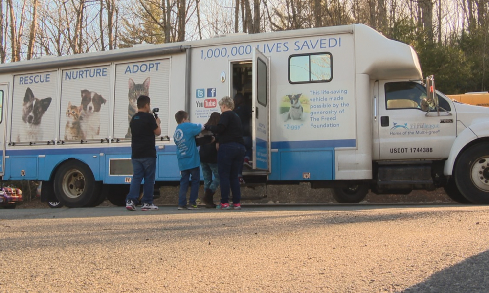 Students from Harris Middle School gathered at the Mitchell County Animal Rescue bright and early Tuesday morning to get 19 cats and four dogs ready for their trip to New York City and the largest no kill shelter in the country. Photo credit: WLOS staff