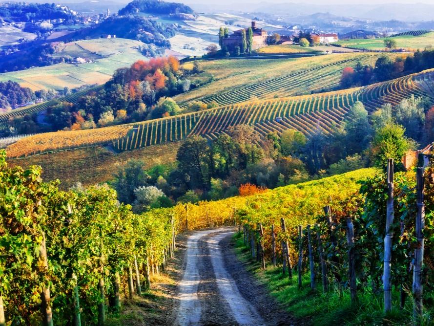 Barolo_Wine Tour_Day Tour_car transportation.jpg