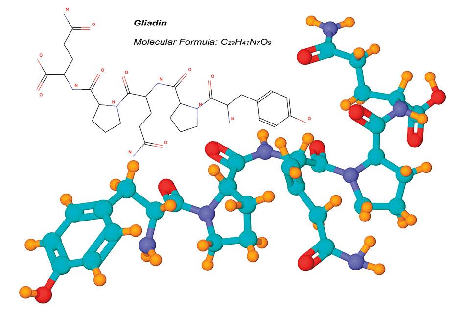 6e64f-gliadinmolecule.jpg