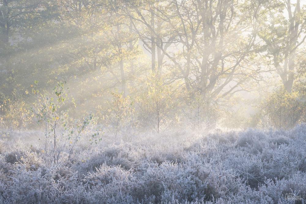 Frosty Heather