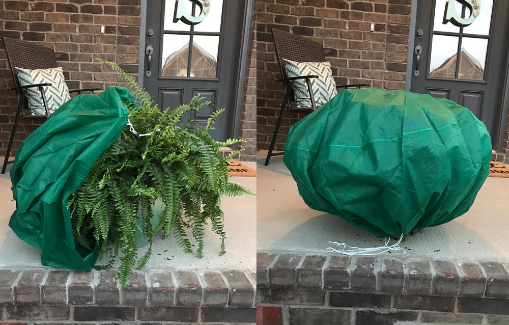 Frost Bag