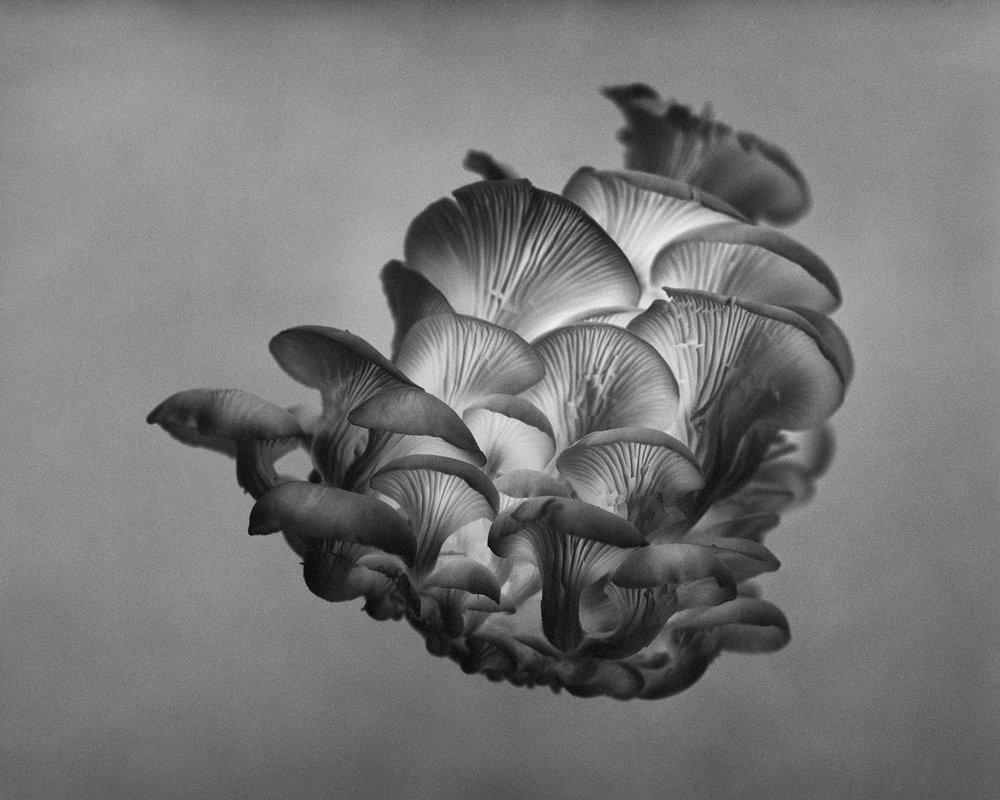 mushroom_002_1800_72.jpg