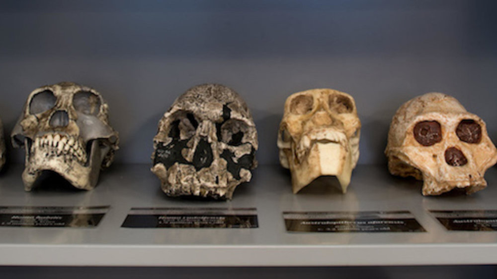sackler-ed-lab-skulls_wideexact_2460.jpg