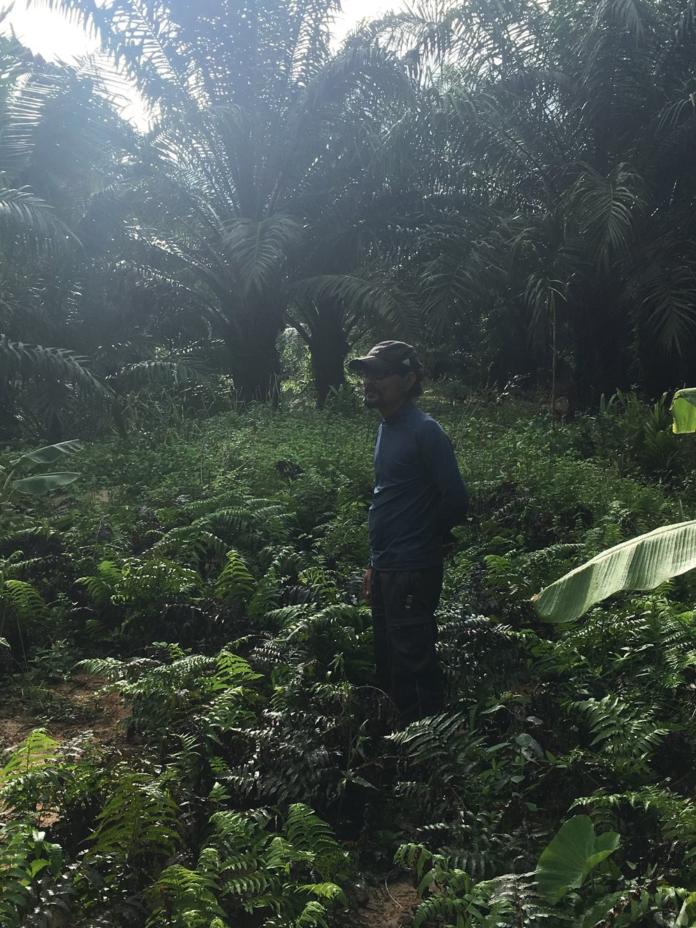 P'Ju (pictured) is skeptical of his relatives', friends', and neighbors' reliance on monocultures such as rubber and oil palm (pictured in background), given their households' direct exposure to the vagaries of global commodity markets. P'Ju advocates for food autonomy and welcomes volunteers of all ages and nationalities to visit and work with him.