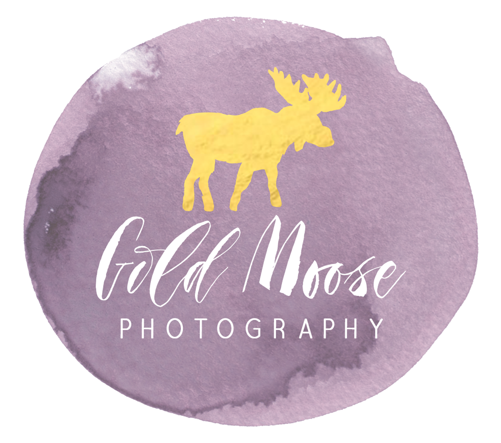 Gold Moose Photography