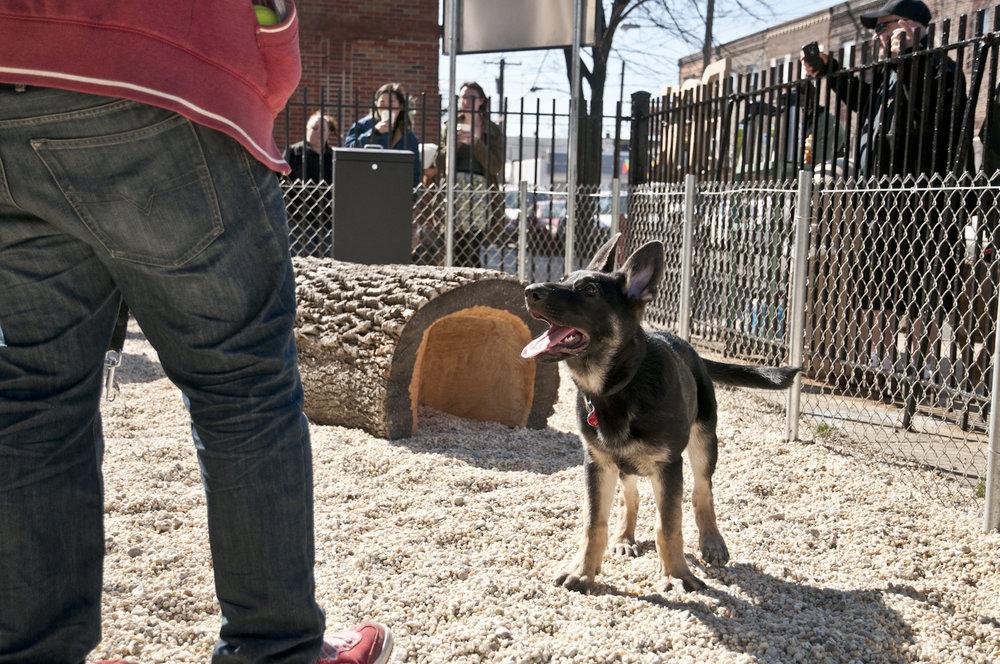 Dog Park at BOK