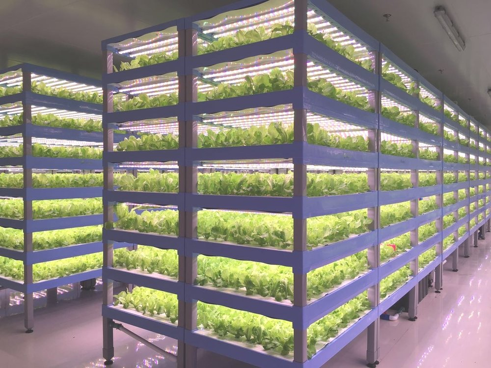 Vertical Farm Design and Layout