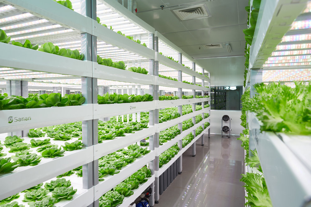 Vertical Farm design and layout is critical to the success of a indoor vertical farm.