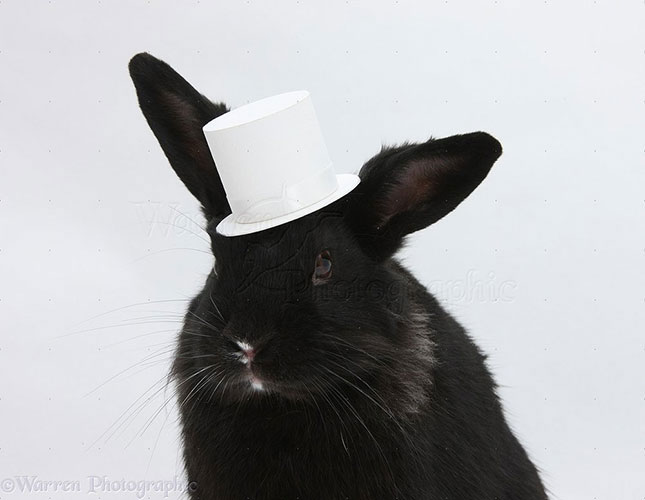 White-Hat Hacker   BOA   NSA