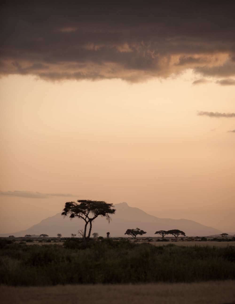 Kenya Artisan + Wildlife Experience - (SOLD OUT)