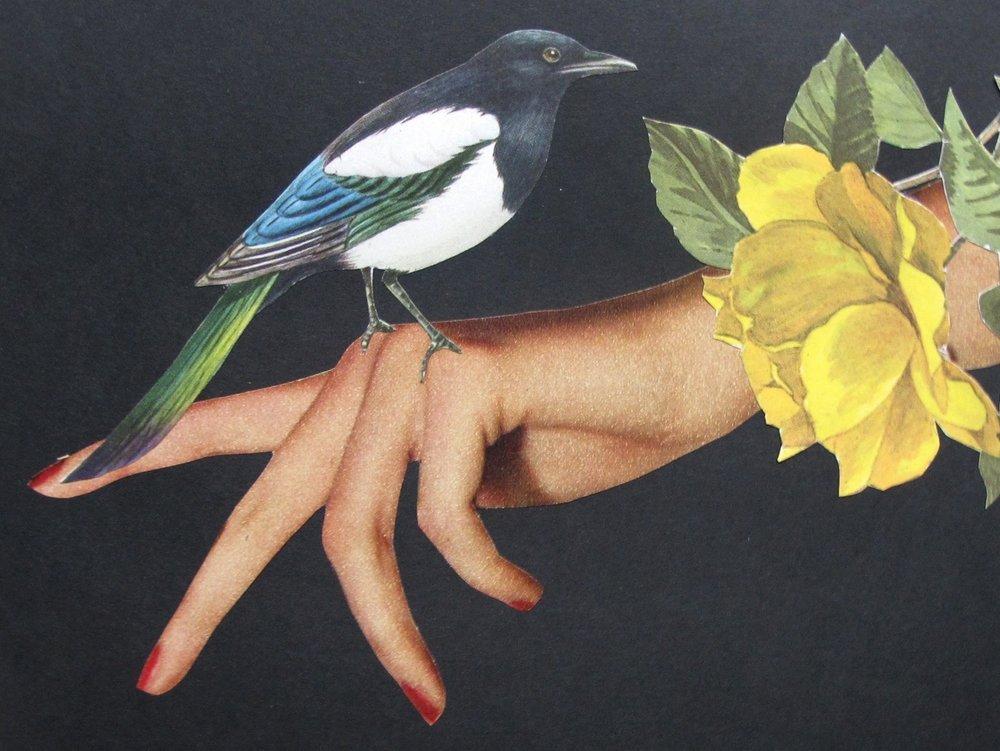 BIRD HAND.jpeg