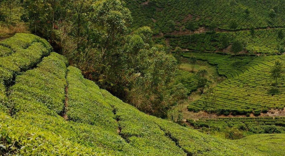 Types of Tea -