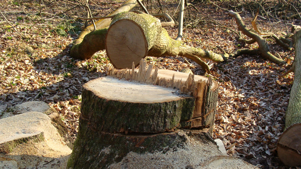 Treestump22008.JPG