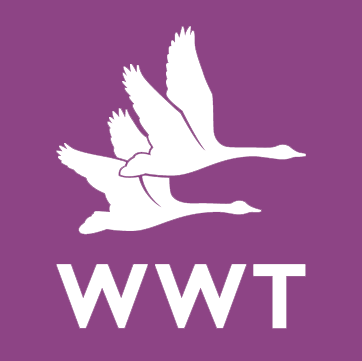 wwt-purple.png