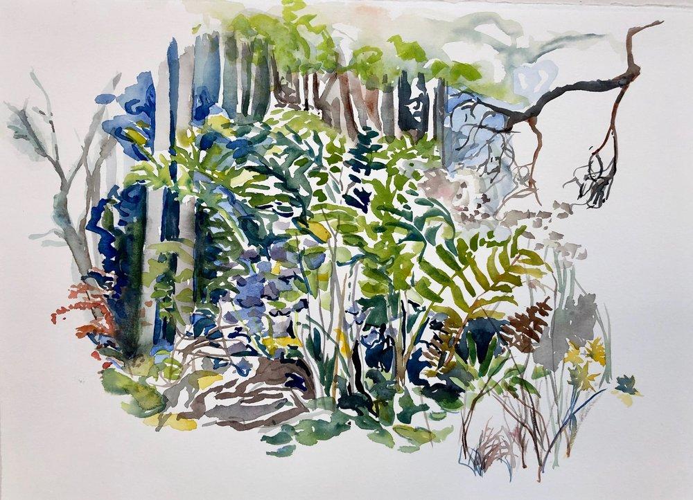 Islesboro Flora