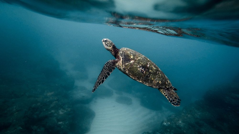 Nem mais uma palhinha de plástico. - Ajuda a salvar os oceanos.