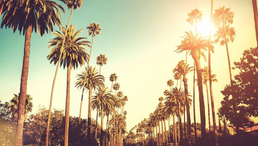Los Angeles Palm Trees.jpg