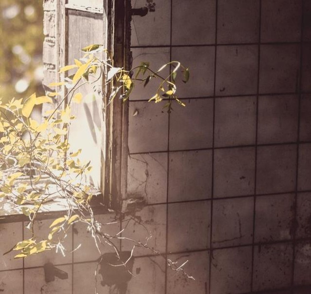 Photo Credit: Denny Müller on Unsplash •••••• Vines crawl, sprawl floor and walls The scratching capture, my fall Sitting earth wound, bound  Words by @jenn_storey •••••• #haiku #prose #poetry #indiepress #prosepoem #prosepoetry #literarypress #experimental #expandedfield #experimentalwriting #multimedia #transmedia