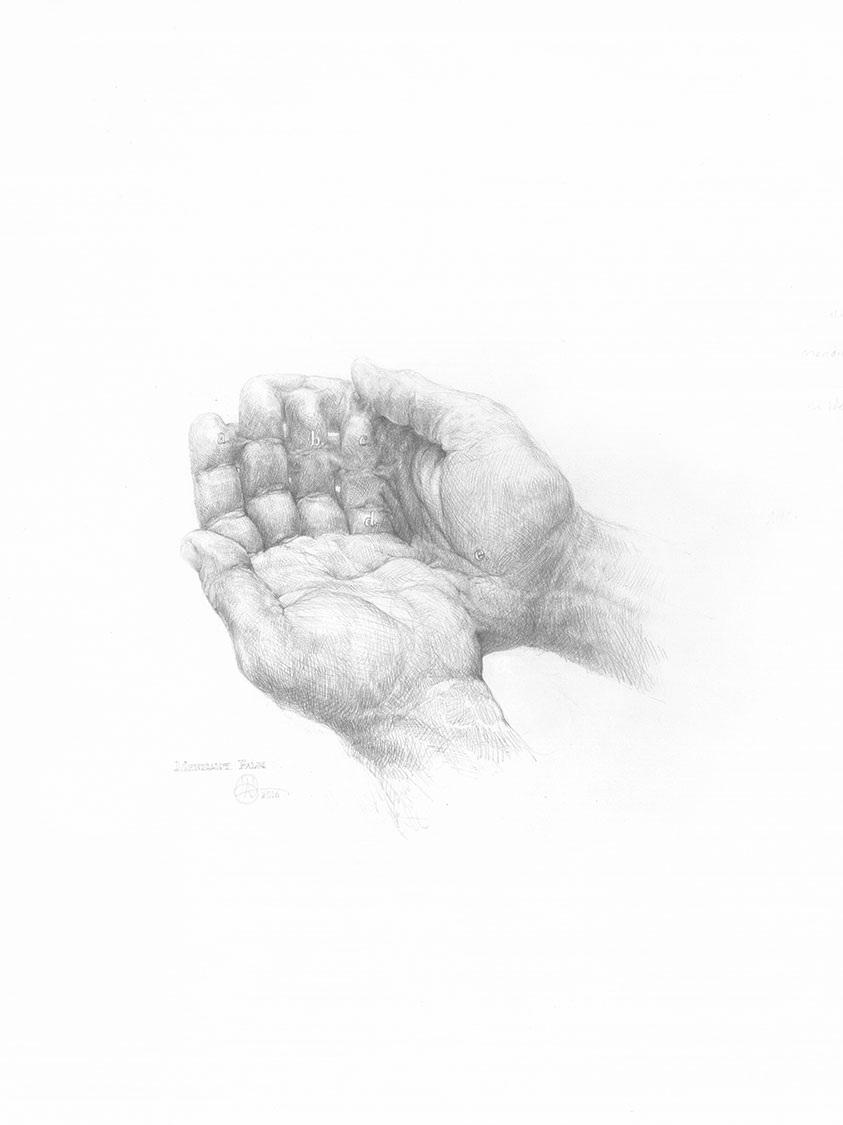 """Mendicant Palm , 2016 Graphite sur papier, 18"""" x 24""""."""