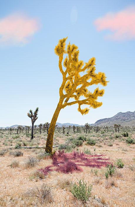 "Joshua Tree Yellow,  2018, Édition de 5, impression pigmentaire, 30 x 20 ""."