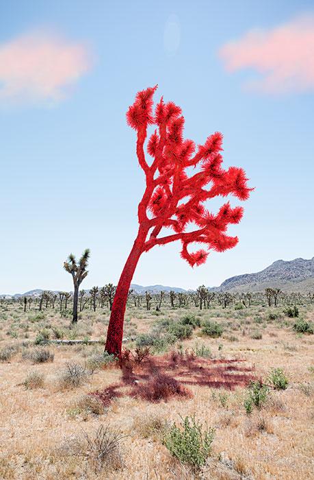 "Joshua tree red,  2018, Édition de 5, impression pigmentaire, 30 x 20 ""."
