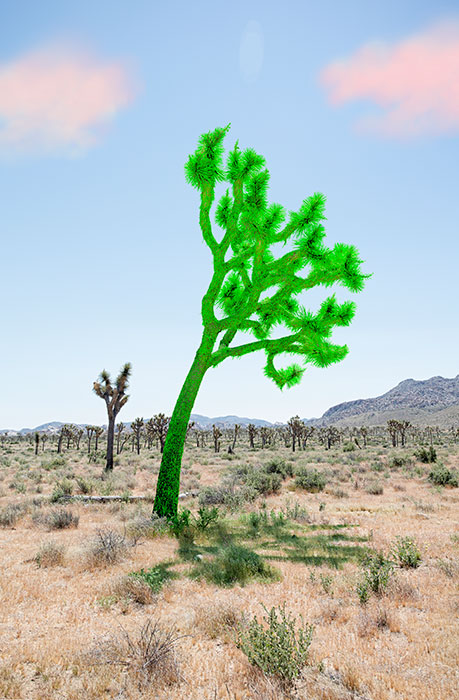 "Joshua tree green , 2018, Édition de 5, impression pigmentaire, 30 x 20 ""."