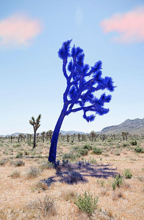"Joshua tree dark blue,  2018, Édition de 5, impression pigmentaire, 30 x 20 ""."