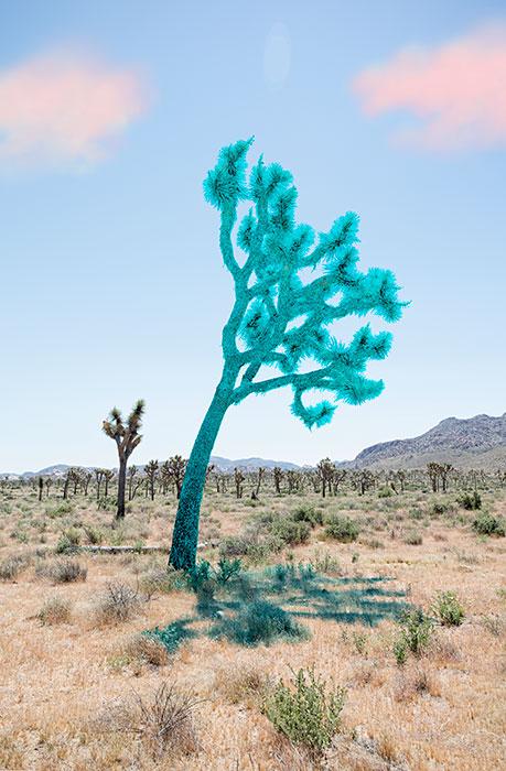 "Joshua tree,  2018 , Édition de 5, impression pigmentaire, 30 x 20 ""."