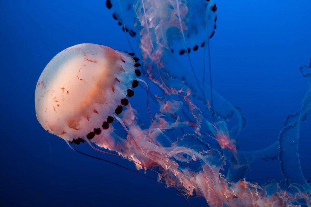jellyfish-motion-imagejpeg