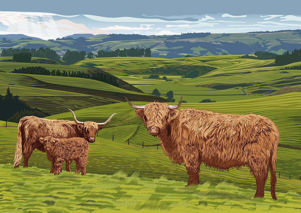 Highland-Cattle-Piece-fresh.jpg