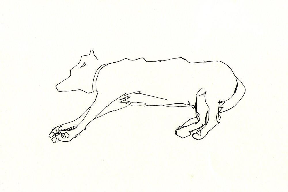 Loveblood - Liam Wales - sleeping dog .jpg