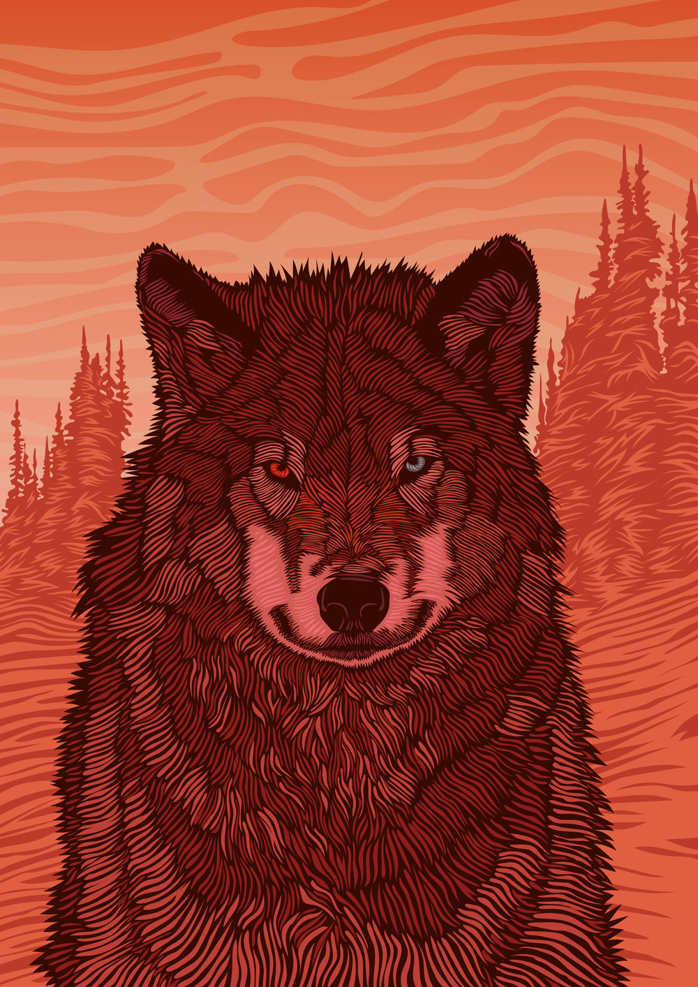 Loveblood - Jacob Light- Wild-Wolf-Illustration-reddish.jpg
