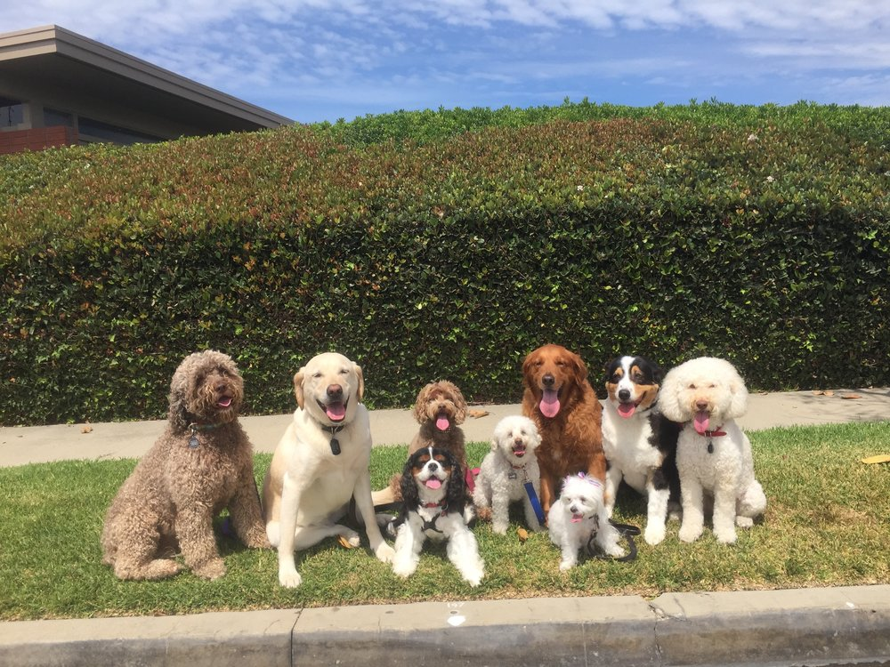 Sophie, June, Abby, Buddy, Sissy, Star, Bella, Indy & Puffy - Just a few more of Cat's satisfied clients posing for a post workout pic.