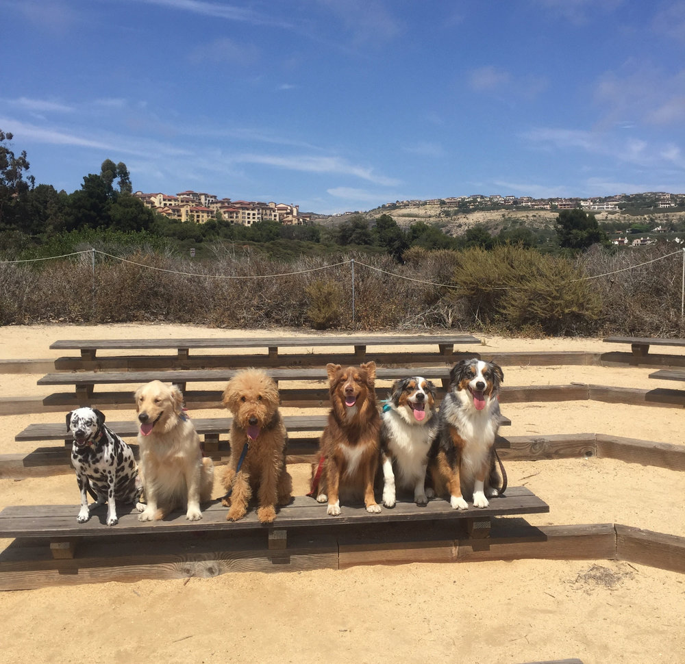 Smiley, Puppy Ella, Puppy Hazel, Carter, Echo and Bowie making rad things happen the Cat Walks Dog® way!