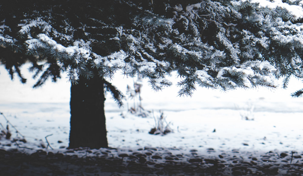 enchantresswell-8.jpg