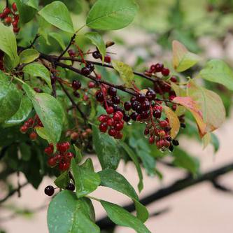 birdwatching-willow-springs-cabins-black-hills-rapid-city-south-dakota