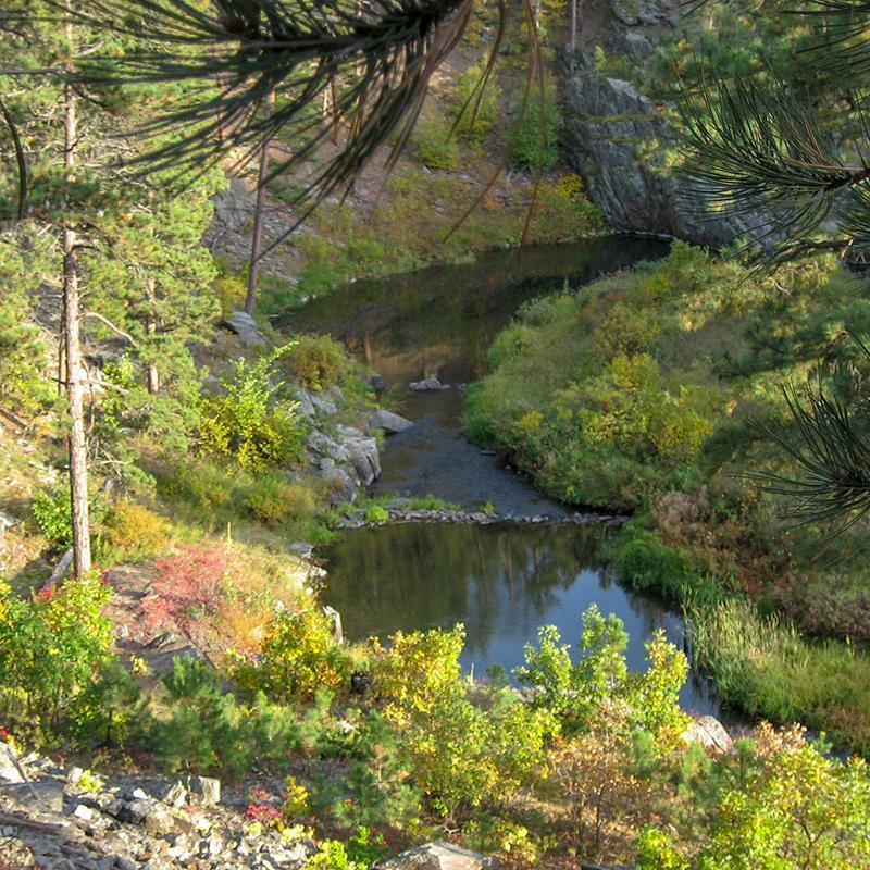 spring-creek-summer-willow-springs-cabins-black-hills-rapid-city-south-dakota