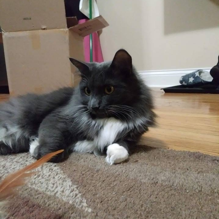 $25 Donation   Food and toys for a month for a pet like Liara