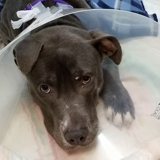 $150 Donation   Benefit a pet going under neuter/spay procedure, like Mila who was tied to a fence and left to fend for herself