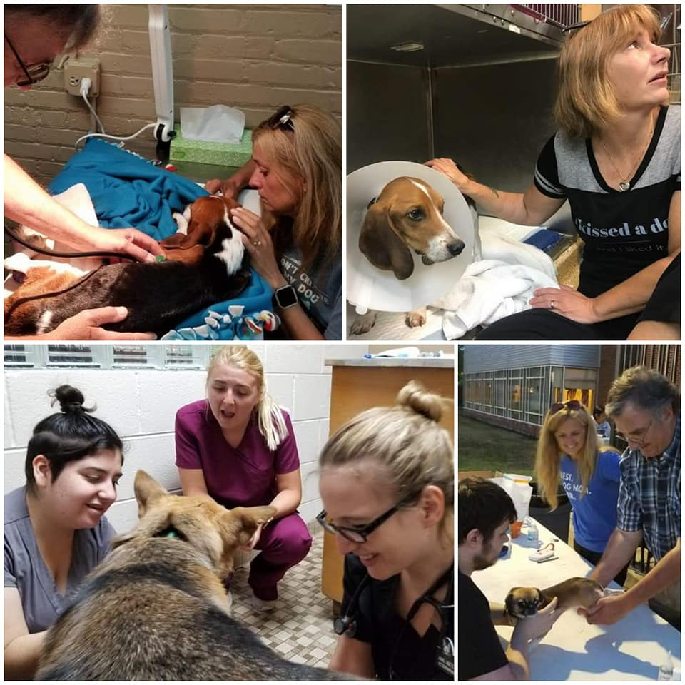 Volunteer - The Garrido Stray Rescue Foundation would not be possible without volunteers. See how you can help with one of our free community microchipping events or help our pet rescues. We'd love to have you on our team.